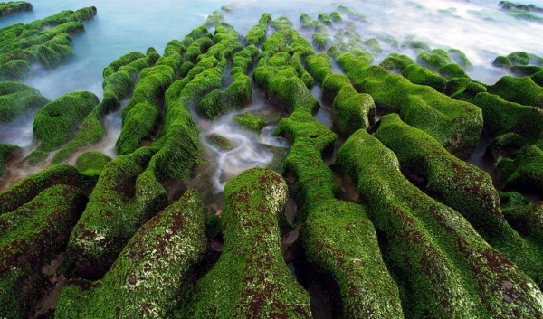 كيف تتكاثر النباتات اللاوعائية اللابذرية