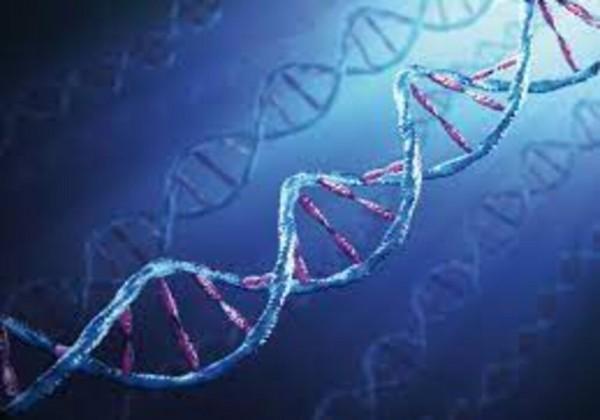 الهجين مخلوق حي تختلف فيه الجينات المقابلة في السمة الوراثية