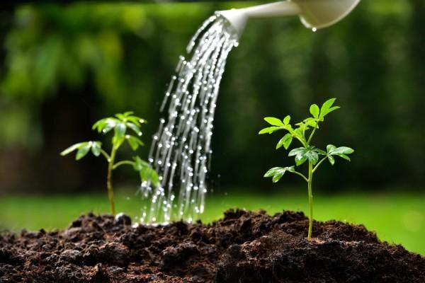 تسمى النباتات التي تنمو أولاً في بيئات جديدة أو غير مستقرة