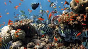 إذا كان عدد الأسماك في البحيرة 3400 سمكة