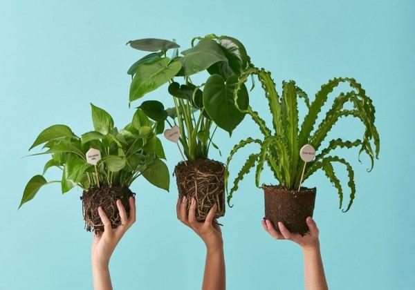 ما هي خصائص النباتات