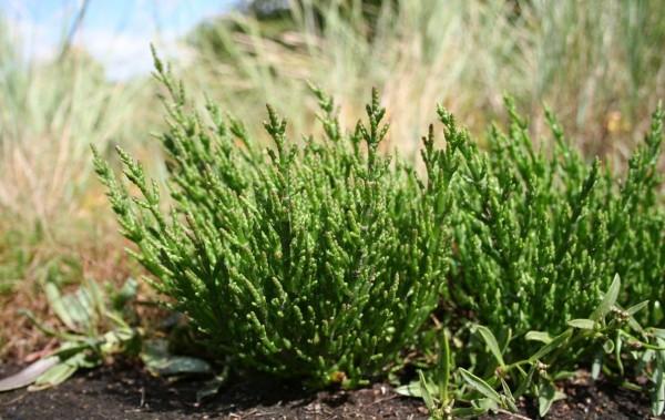 لماذا تعتبر النباتات الرائدة في البيئات غير المستقرة مهمة