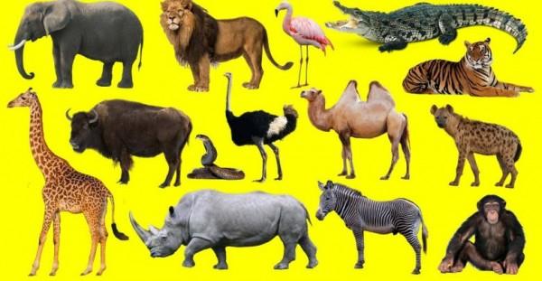 الكائنات الكانسة هي كائنات كبيرة تأكل كائنات أصغر منها صح أم خطأ