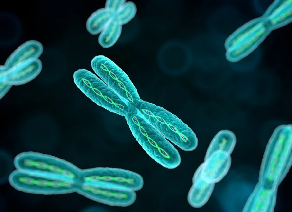 خلال الانقسام المنصف تحتوي كل خلية جنسية على 22 كروموسومًا
