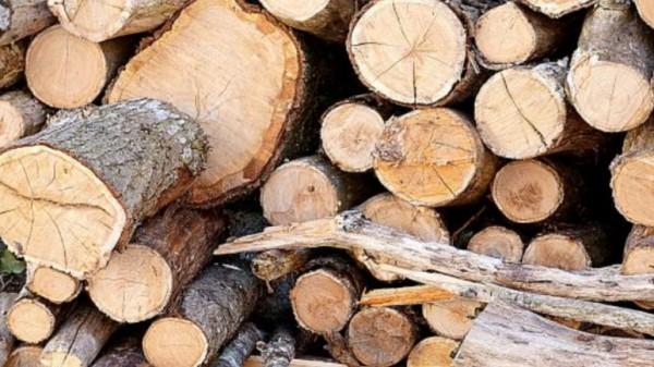 يستخرج الخشب الصلب من بعض أنواع الأشجار منها