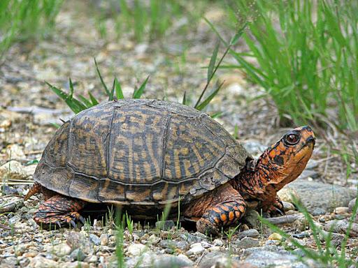 كم تبلغ المدة التى يمكن أن تعيشها بعض أنواع السلاحف