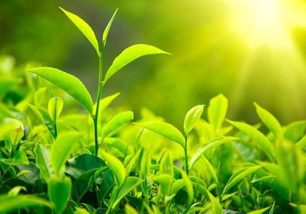 اذكر بعض المصادر التى يحتاجها النبات لصنع غذائه والحصول على الطاقه