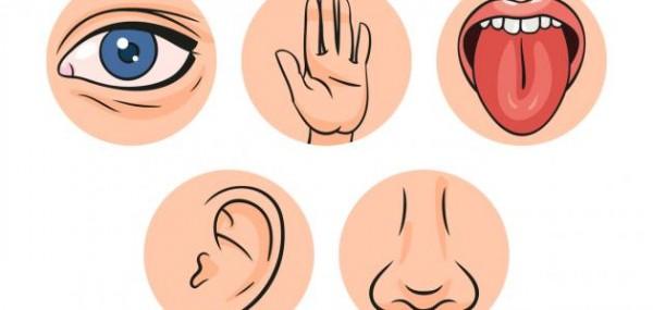 يستخدم البشر الحواس الخمس من خلال الاتصال بـ