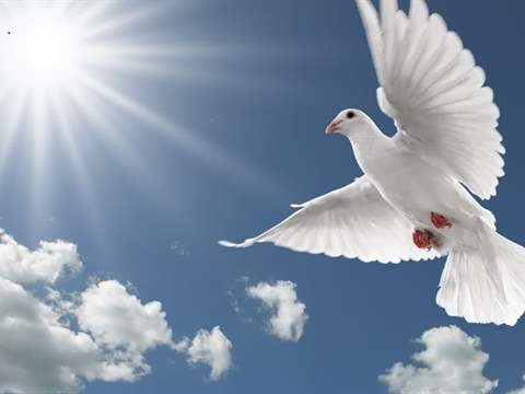 فهم الله عز وجل كلام الطير لنبيه