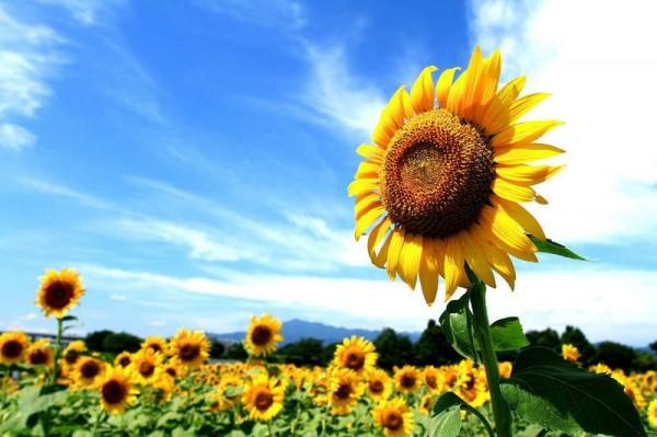 في دورة حياة نباتات البذور يتم التكاثر بواسطة