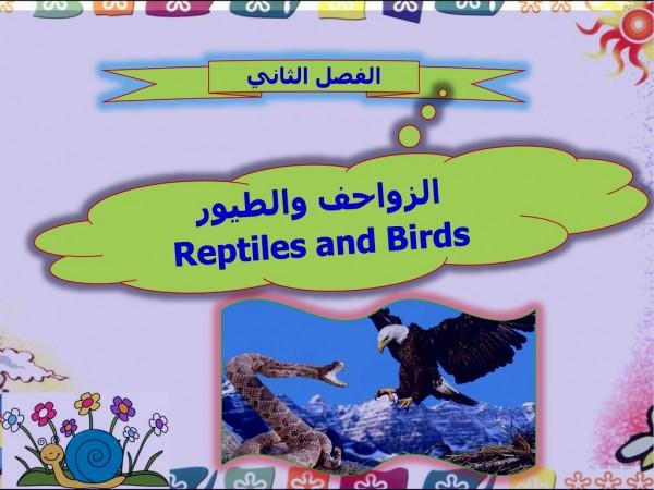 ما الفرق بين الطيور والزواحف في التكاثر
