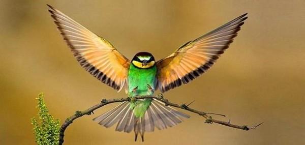 أي من التكيفات التالية تساعد الطيور على الطيران