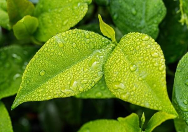 هل تحتوي جميع النباتات على أوراق خضراء