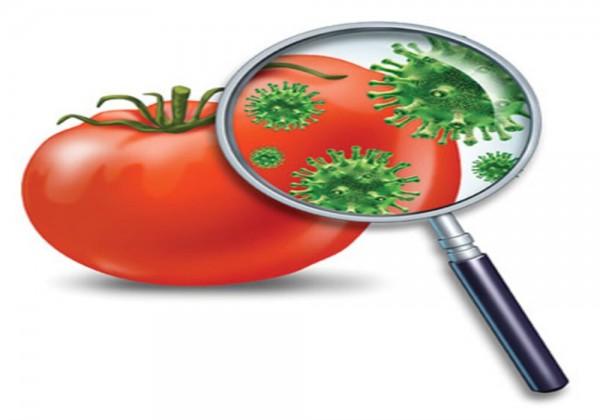كيف يمكن تحقيق السلامة الغذائية للإنسان