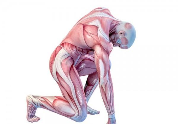 ما هي تغيرات الطاقة التي تحدث في العضلات
