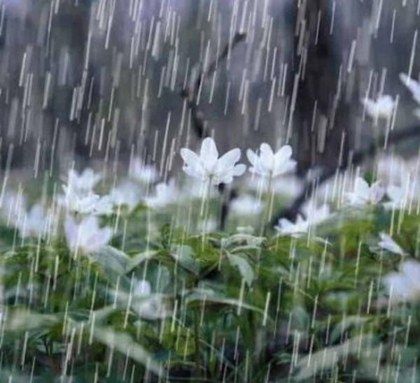 المطر من نِعم الله التي يحرم أن ننسبها إلى غيره