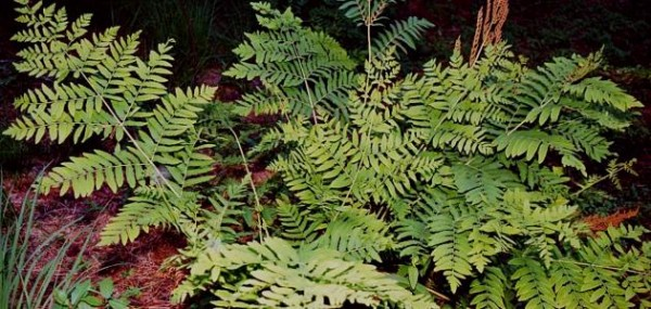 تعد الحزازيات نباتات وعائية وهي من بين أوائل النباتات التي تنمو في بيئات جديدة