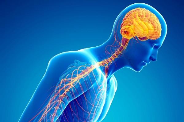 ما هي خصائص الجهاز العصبي السمبثاوي