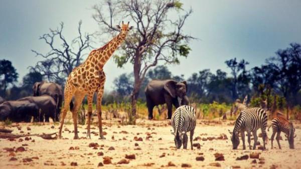 ما هو نوع التنوع البيولوجي المقصود بعدد الأنواع ونسبة كل نوع في