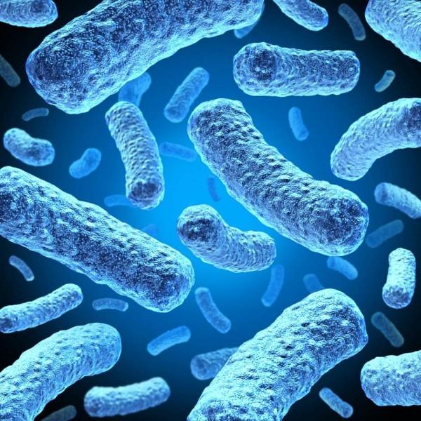 تقول زميلتي إنه من الممكن أن تكون البكتيريا الموجودة على بشرتي