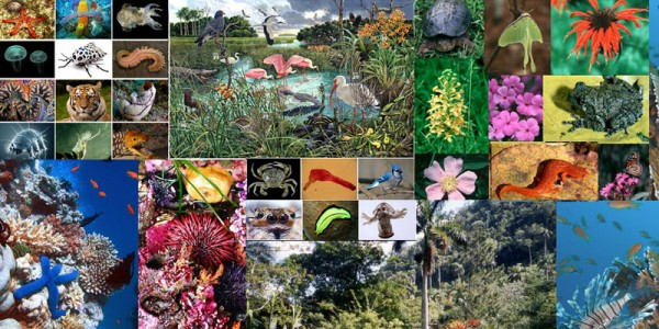 ما هي المناطق الحيوية البرية التي تحتوي على أكبر تنوع حيوي
