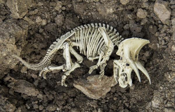 """ما صحة العبارة التالية """"السبب الوحيد الانقراض الآلأف من أنواع المخلوقات الحية هو تدمير المواطن فقط"""""""