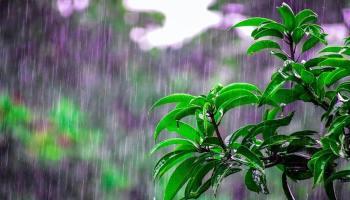 يقول بعض العلماء أننا اكتسبنا حبًا لرائحة المطر من أجدادنا