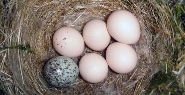 جواب سؤال أي من الثدييات التالية تضع البيض
