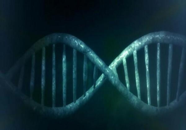 كيف تحدث عملية تضاعف الحمض النووي DNA