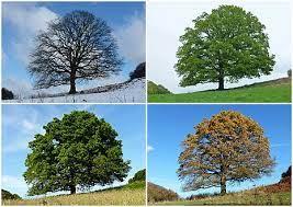 الفصول هي فترات من السنة تتميز كل منها بظروف مناخية خاصة