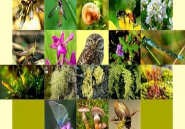 ماذا تمثل القيمة الاقتصادية غير المباشرة للتنوع الحيوي
