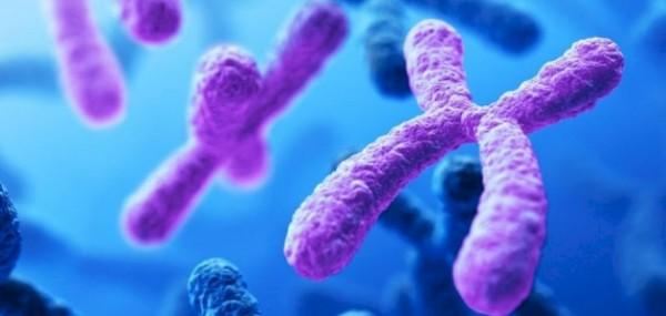 تتضاعف الكروموسومات ثم يصبح الكروموسوم اسمك وأقصر قبل الانقسام