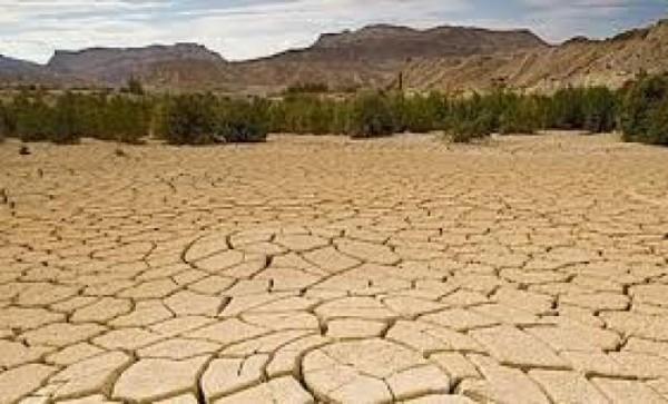 يعتبر قطع الأشجار أحد أسباب التصحر وتدهور الأراضي الزراعية